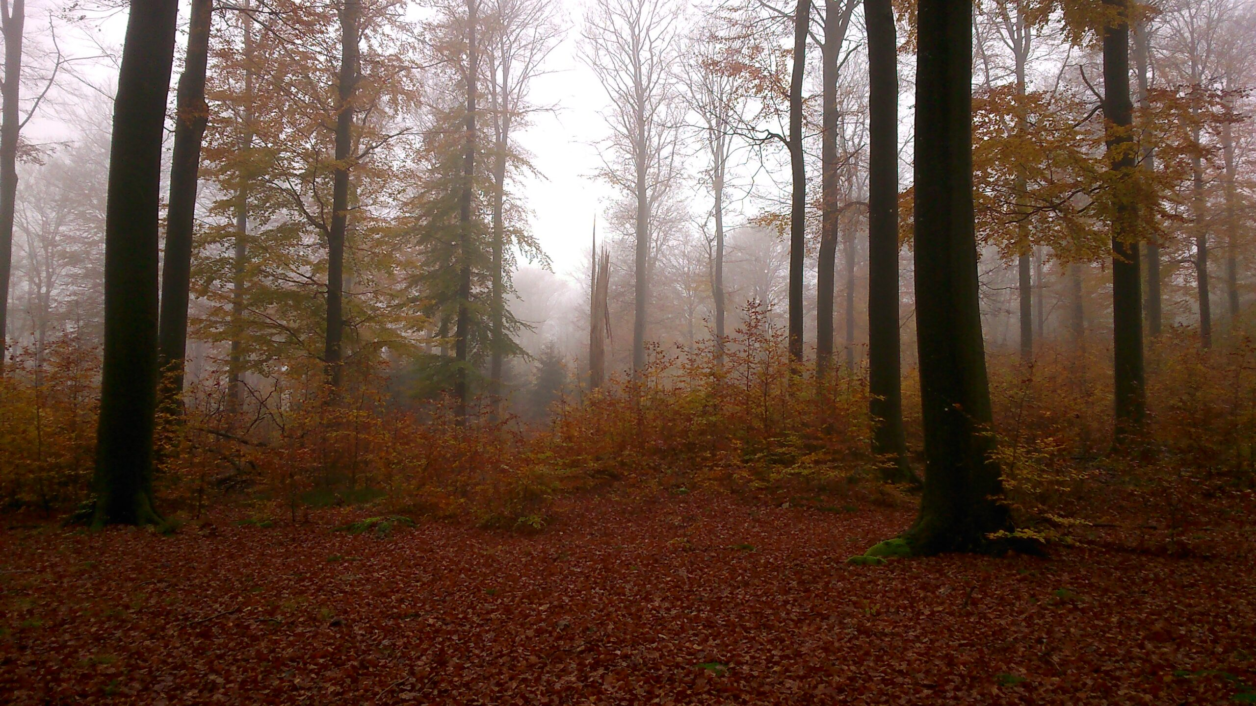 One of the beech stands surveyed in the Ardennes