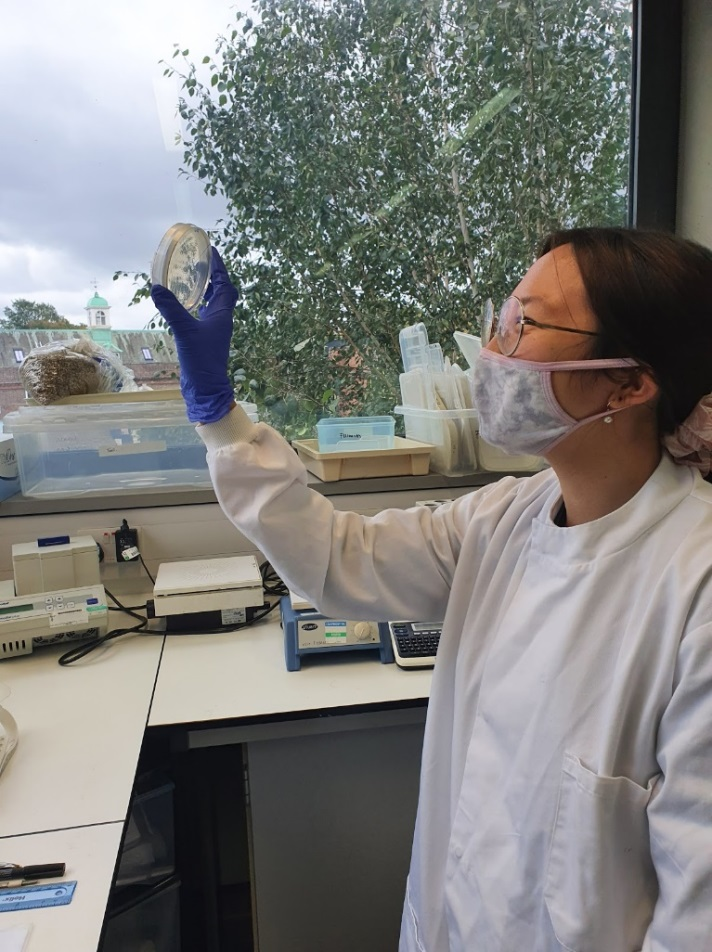 Karen in the Centenary lab at Rothamsted Research (summer 2020)
